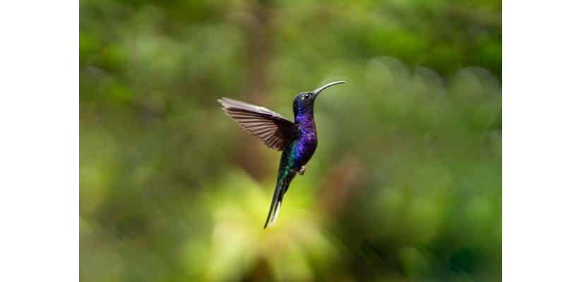 Photo d'un colibri