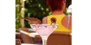 oiseaux sirotant un fond de cocktail