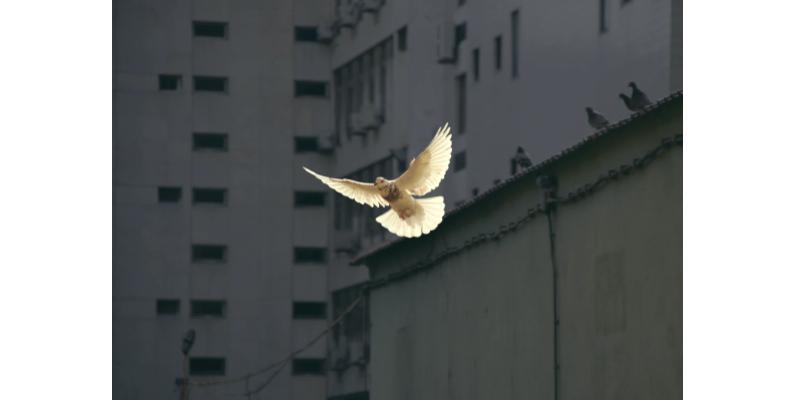 Attitude face au conflit oiseau déployant ses ailes