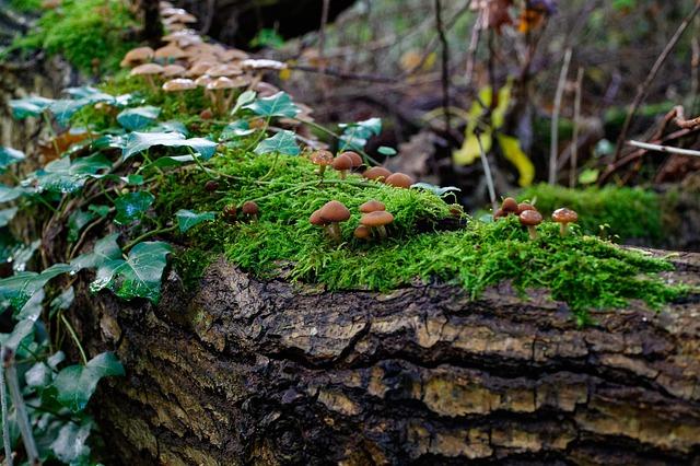 Photo champignons et mousse sur tronc d'arbre