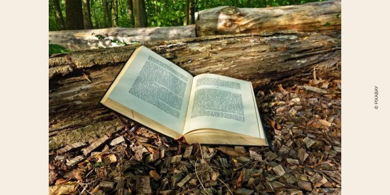 Photo livre ouvert dans une forêt