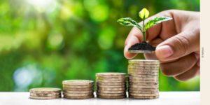 Photo main posant une plante sur un tas de pièces
